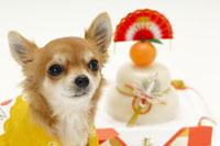 犬と正月小物