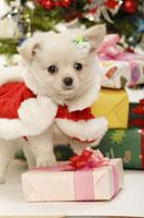犬とクリスマス小物