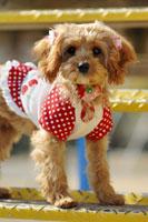 犬 21003004264| 写真素材・ストックフォト・画像・イラスト素材|アマナイメージズ