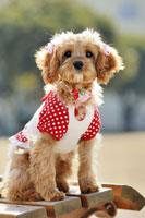 犬 21003004265| 写真素材・ストックフォト・画像・イラスト素材|アマナイメージズ