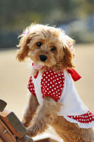犬 21003004266| 写真素材・ストックフォト・画像・イラスト素材|アマナイメージズ