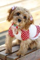犬 21003004267A| 写真素材・ストックフォト・画像・イラスト素材|アマナイメージズ
