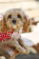 犬 21003004268| 写真素材・ストックフォト・画像・イラスト素材|アマナイメージズ
