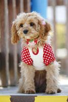 犬 21003004270| 写真素材・ストックフォト・画像・イラスト素材|アマナイメージズ