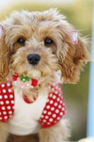犬 21003004271A| 写真素材・ストックフォト・画像・イラスト素材|アマナイメージズ