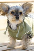 犬 21003004272A| 写真素材・ストックフォト・画像・イラスト素材|アマナイメージズ