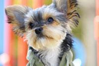 犬 21003004273| 写真素材・ストックフォト・画像・イラスト素材|アマナイメージズ