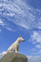 白柴犬 21003007848| 写真素材・ストックフォト・画像・イラスト素材|アマナイメージズ