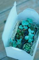 ギフトボックスに入った小さな植物