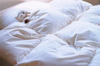 ベッドの上の羊のぬいぐるみ