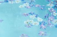 バスタブに浮いた花