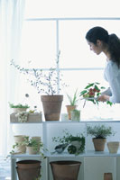ハーブの家庭菜園 21007001412B| 写真素材・ストックフォト・画像・イラスト素材|アマナイメージズ
