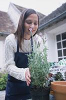 庭でラベンダーを鉢に植える女性