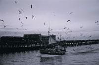 桟橋の脇を走る漁船