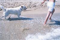 海辺を散歩する犬と飼い主の足元 21007005114| 写真素材・ストックフォト・画像・イラスト素材|アマナイメージズ