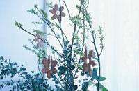 クリスマスの飾り 21008000236A| 写真素材・ストックフォト・画像・イラスト素材|アマナイメージズ