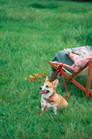 公園のイスに座る女性とコーギー