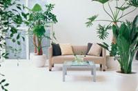 植物に囲まれたリビングルーム
