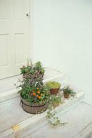 扉の前に置いた寄せ植えをした鉢