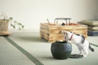 畳みの上に置いた器に前足をかける猫