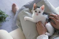膝の上で横たわって見上げる猫