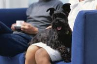 紺色のソファに座ったカップルと黒い犬