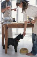 料理をするカップルと犬(ミニチュアシュナウザー)