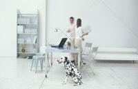 歩く男女と犬(ダルメシアン)