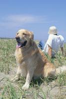 草原に座る男性と犬(ゴールデンレトリバー) 21014000175| 写真素材・ストックフォト・画像・イラスト素材|アマナイメージズ
