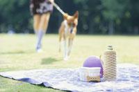 レジャーシートに向かう女性と犬(バセンジー) 21014000185| 写真素材・ストックフォト・画像・イラスト素材|アマナイメージズ