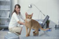 パソコンに向かう女性とデスク上の猫