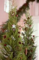 クリスマスツリー 21014000808| 写真素材・ストックフォト・画像・イラスト素材|アマナイメージズ