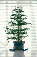 クリスマスツリー 21014000949| 写真素材・ストックフォト・画像・イラスト素材|アマナイメージズ