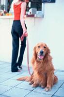 ゴールデンレトリーバーと女性 21014001013| 写真素材・ストックフォト・画像・イラスト素材|アマナイメージズ