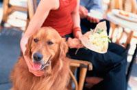 カフェのカップルとゴールデンレトリーバー 21014001014| 写真素材・ストックフォト・画像・イラスト素材|アマナイメージズ