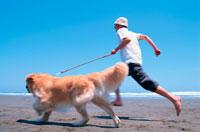 ビーチを走る男性とゴールデンレトリーバー 21014001016| 写真素材・ストックフォト・画像・イラスト素材|アマナイメージズ