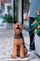 道に座った犬 21014001049| 写真素材・ストックフォト・画像・イラスト素材|アマナイメージズ
