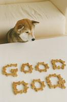 ドッグフードで作ったGOODDOGの文字と柴犬