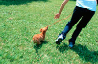 公園をミニチュアダックスフンドと走る女性 21014001106| 写真素材・ストックフォト・画像・イラスト素材|アマナイメージズ