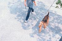 道を歩く女性とワイアーフォックステリア