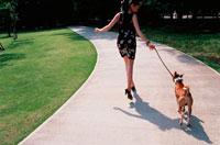 バセンジーと公園を走る女性 21014001117| 写真素材・ストックフォト・画像・イラスト素材|アマナイメージズ