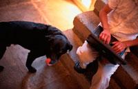 階段でパソコンを打つ男性と犬