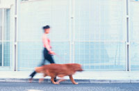 散歩をする女性とゴールデンレトリーバー 21014001178| 写真素材・ストックフォト・画像・イラスト素材|アマナイメージズ