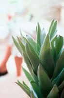 手前に植物奥に足を組む女性 21014001267  写真素材・ストックフォト・画像・イラスト素材 アマナイメージズ