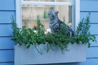 ネコと窓辺を飾るハーブのプランター