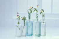 5個のガラス瓶にビオラ