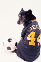 サッカーユニフォームを着た黒い犬 21017001505| 写真素材・ストックフォト・画像・イラスト素材|アマナイメージズ