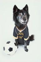 サッカーユニフォームを着た黒い犬
