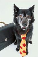 ネクタイを締めメガネをかけた黒い犬
