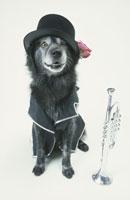 黒い帽子と服を着た犬とラッパ